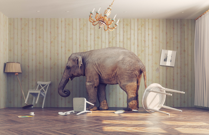 How do you deal with the elephant in the room?